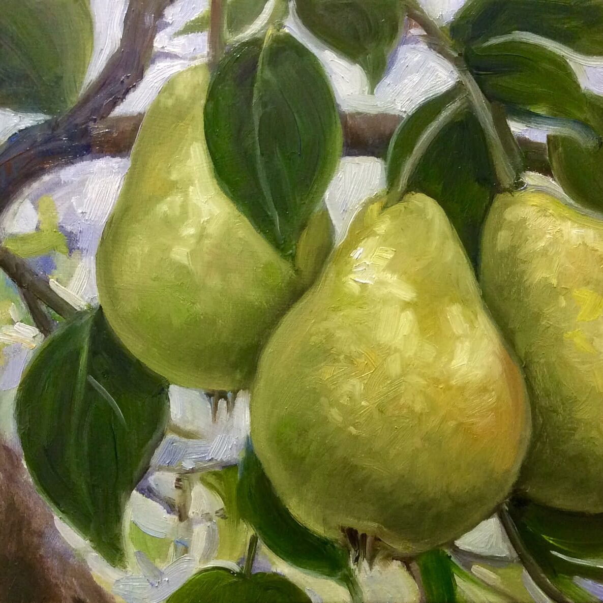 Pears-oil-8x8-McNinch